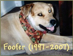 In Loving Memory: Foofer (1997-2007)